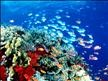 DIWA Diving Instructions Worldwide Coral Fish  Diving.jpg